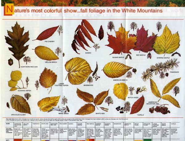 feuilles-automne-white-m001